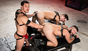 Big daddy Joey D lets his stallions out of their cage